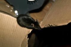Alien House Mouse