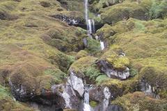 Grey-headed Waterfall