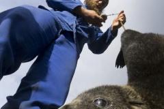 Marion Island Marine Mammal Programme