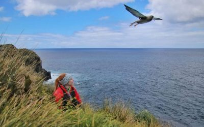Gough Island Restoration Project is recruiting!