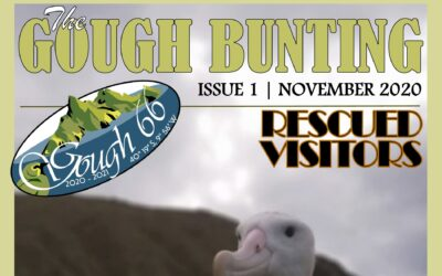 Gough Island Newsletter November 2020 – Now Available