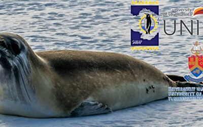 SANAP Research Project  – Ross Seals in a Changing Environment